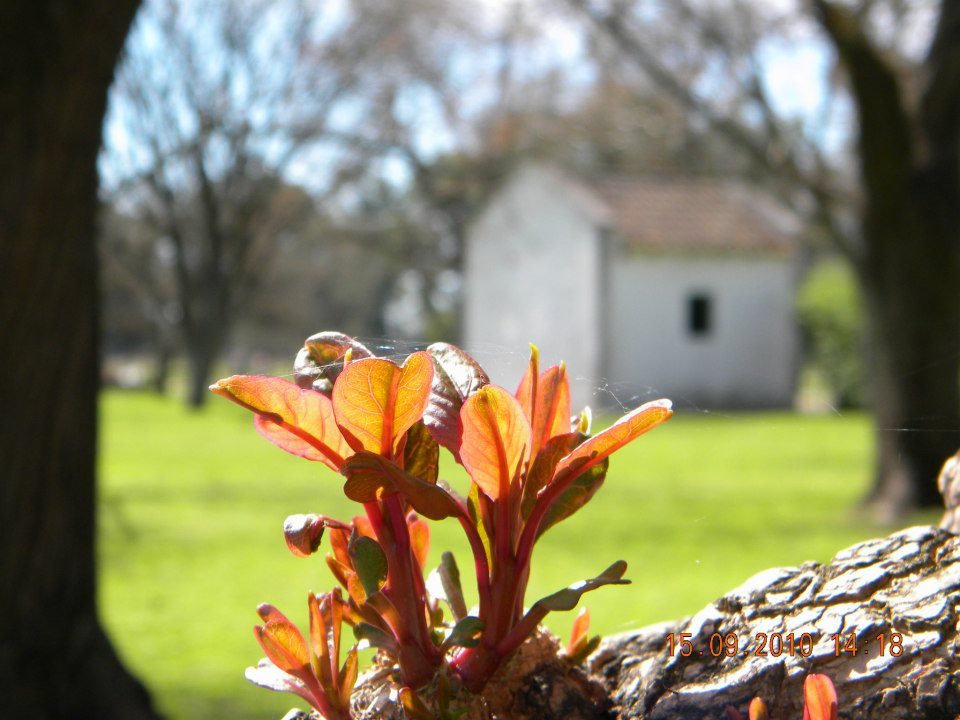 spring areco town