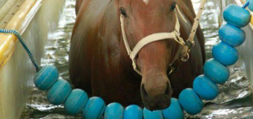 caballos kawell