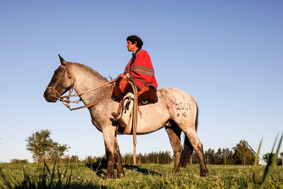 los caballos de los gauchos